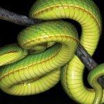 salazar Slytherin snake